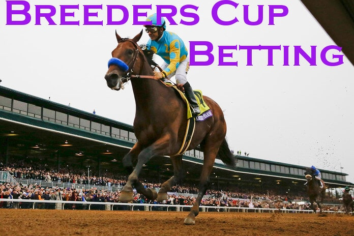 Breeders Cup Betting 2019 Race Odds Betting Sites 2019