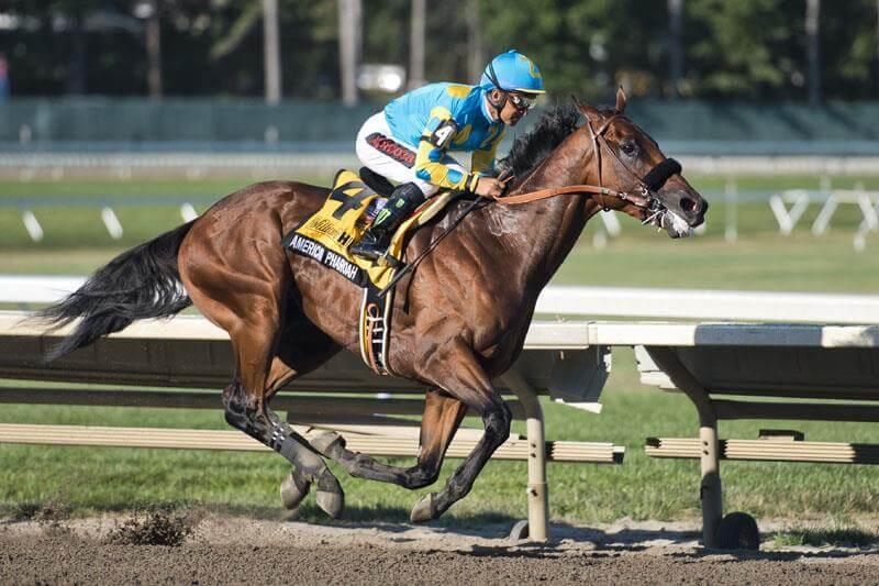 American Pharoah Horse