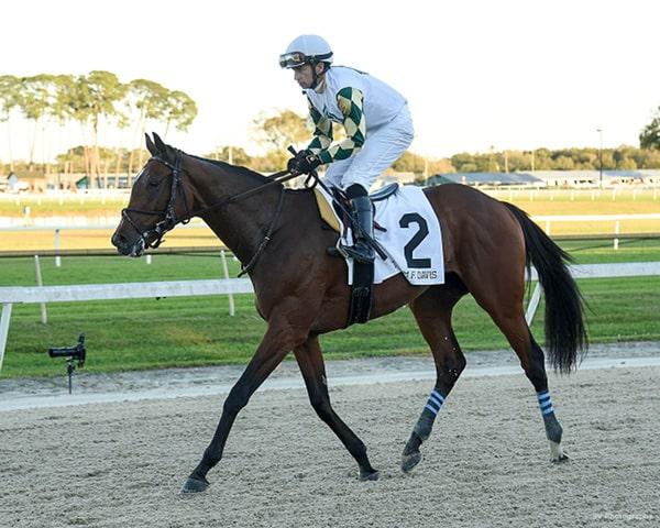 2020 Belmont Stakes - Sole Volante